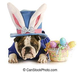 Wielkanoc, pies