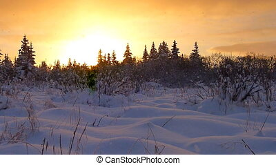 Snowfall Sunset Glow - Huge snowflakes descend slowly and...