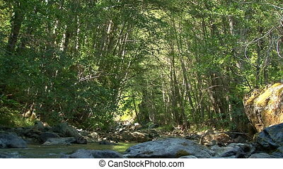 Shady Creek Sunny Tree Vault - A canopy of trees forms a...