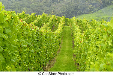 wineyard in the east of france