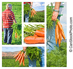 Collage of carrot farmer on his farm