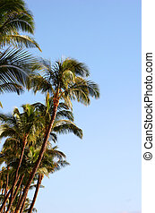 palm trees against cloudless light blue sky