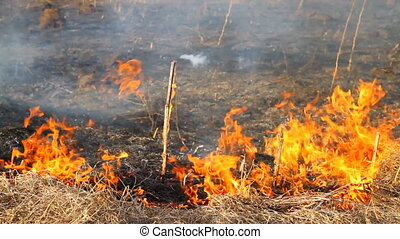 burning dry grass 2