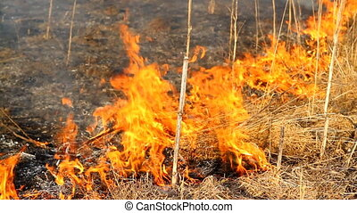 burning dry grass 3