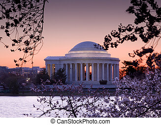 Cherry Blossom and Jefferson Memorial - Jefferson Memorial...