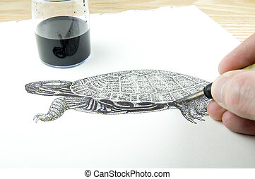 pen and ink illustrator drawing a terrapin