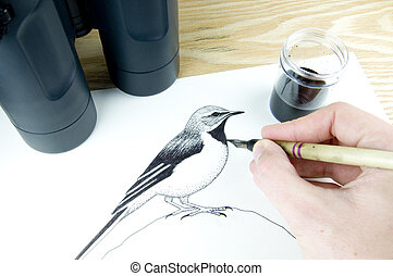 pen and ink illustrator drawing a bird using binoculars