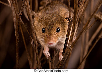 Mouse 3 - The third of 4 mice photos Macro photos of a...