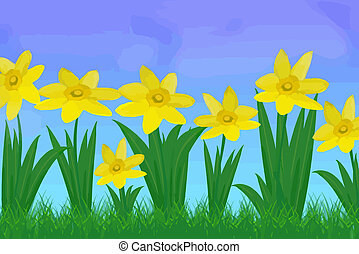 Daffodils - Daffodil flowers with blue sky as background