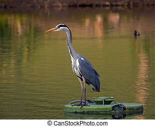 Heron perched on a floating water pump