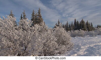 Winter Day Hoar Frost Pan - Pan from right to left of a...