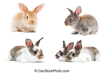 set of baby bunny rabbits - set of young baby light brown...