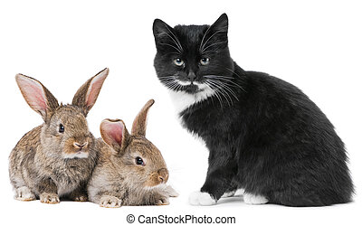 Kitten cat and rabbit bunny - Group of young domestic...