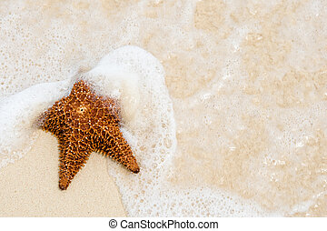 Red starfish on a sand beach near ocean