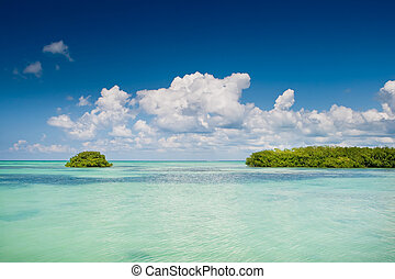 Island of mangrove green forest in a blue ocean in summer...