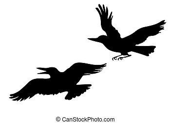 vector drawing two ravens on white background