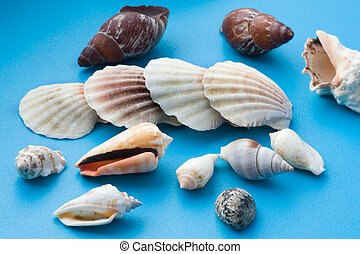 decor seashell on blue
