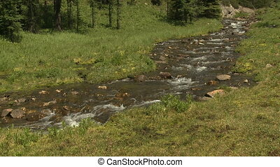 Pristine alpine stream - Alpine mountain stream flowing...