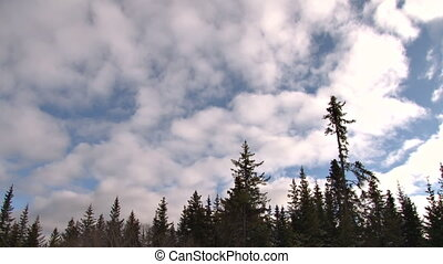 Forest Sky Cloud Time Lapse - Late afternoon cumulus moving...
