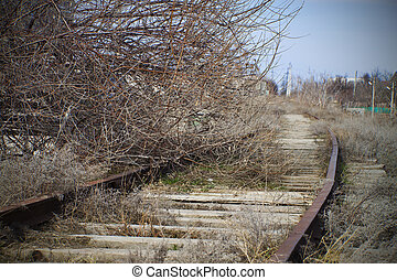 Tree on an abandoned railroad track