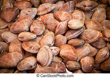 fresh clams at a fish market