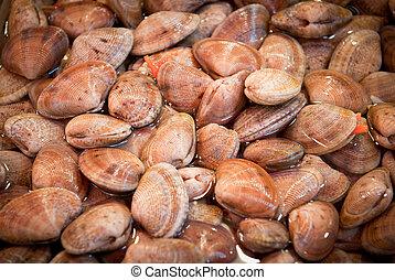 fresh clams at a fish market