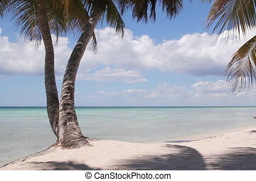 Perfect beach. - View through shaded palm trees of beautiful...