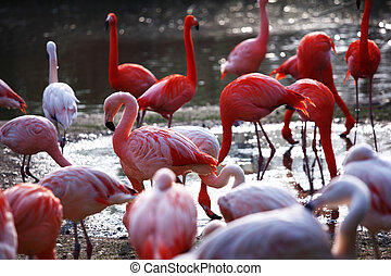 flamingo - pink flamingo in zoo close up