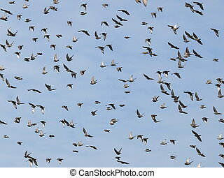 photo of flock of birds
