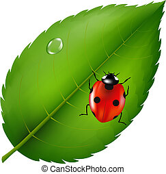 Ladybird On Leaf - Ladybug On Leaf, Isolated On White...