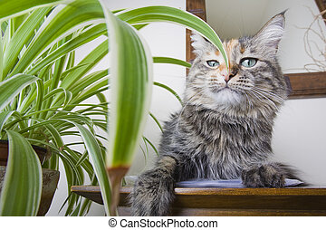 Haughty Cat - Cat on a table next to a houseplant with a...
