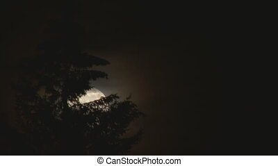 Wispy Super Moon Tree - Supermoon of March 19, 2011 rises in...