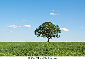 Lone Tree in a Green Field - A lone tree stands in a green...