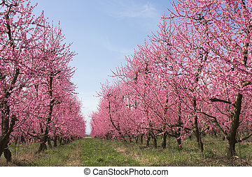 farm with flowering trees