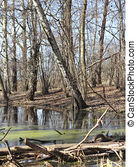 Riparian forest in early spring in Berlin, the German...