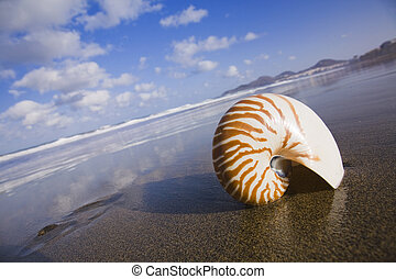 Nautilus Shell - Nautilus shell on the beach at low tide