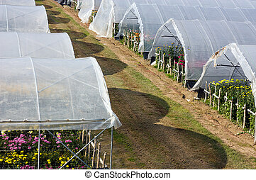greenhouse - nursery of flowers and plants for garden