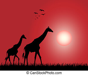 Giraffe - Illustration of the giraffes on the decline