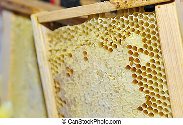 Honeycomb in the wooden frame
