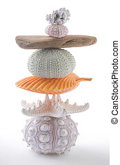 Zen Stacks - Stack of seashells and driftwood from the beach...
