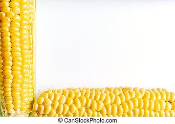 Close up of the corn cob