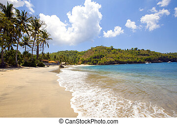 Island in ocean, sand beach, palm trees
