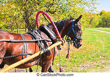 Horse with trappings on lawn in sunny day