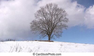 Lonely tree on winter