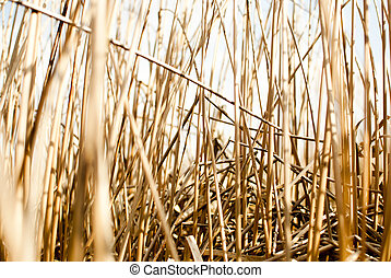 Reed - A cane reed wall texture