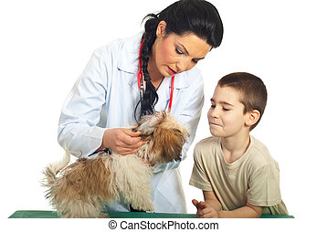 Doctor vet checking puppy ears - Doctor vet checking puppy...