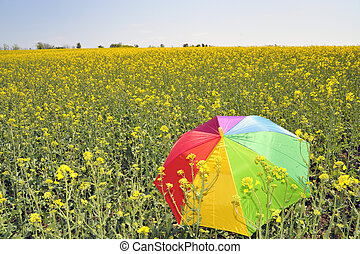 umbrella on rapeseed field