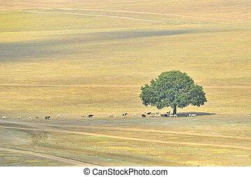 alone tree on autumn