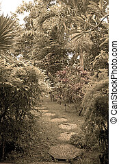 path in eastern garden
