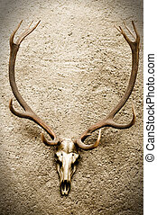 Deers Skull on a Wall - Deers Skull on a Wall with some...